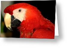 Portrait Of Macaw Greeting Card