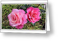 Portrait Of Sister Roses Greeting Card