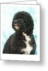 Portugese Water Dog 418 Greeting Card