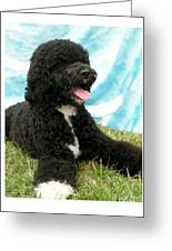 Portugese Water Dog 768 Greeting Card