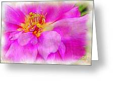 Portulaca With Texture Greeting Card