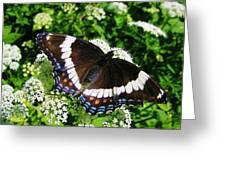 Posing Butterfly Greeting Card
