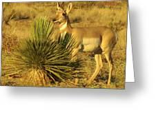 Posing Pronghorn Greeting Card