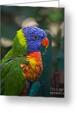 Posing Rainbow Lorikeet. Greeting Card