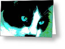 Poster Kitty Greeting Card
