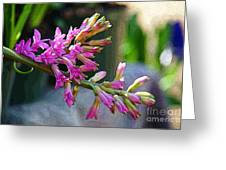 Posteredged Flowers Greeting Card