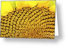 Posterized Sunflower Closeup Greeting Card