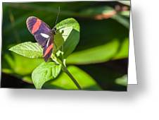 Postman Butterfly Greeting Card