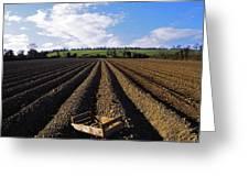 Potato Field, Ireland Greeting Card
