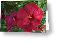 Potchen's Hibiscus Greeting Card