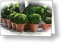 Potted Topiary Garden Greeting Card