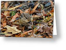 Pouch Filling Chipmunk  - C3041a Greeting Card