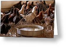 Poultry Greeting Card