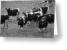Pourquoi Pas Les Vache Greeting Card