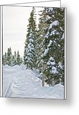 Powdery Snow Path Greeting Card