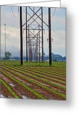 Power And Plants II Greeting Card