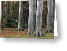 Powerscourt Woods,co Greeting Card