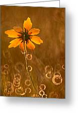 Prairie Coreopsis And Dewdrops Greeting Card