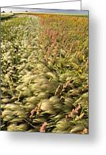 Prairie Crop With Weeds Greeting Card