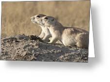 Prairie Dog Pair Grasslands Np Greeting Card