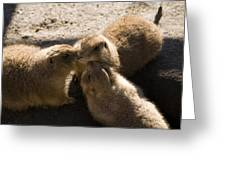 Prairie Dog Gossip Session Greeting Card