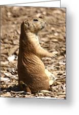 Prairie Dog Profile Greeting Card