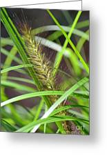 Prairie Dropseed Greeting Card