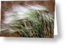 Prairie Grass, Badlands National Park Greeting Card
