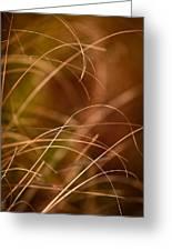 Prairie Grasses Number 4 Greeting Card
