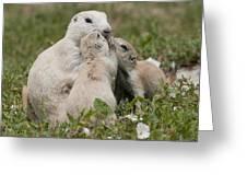 Prairie Kiss Greeting Card