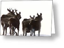 Prairie Moose Saskatchewan Greeting Card