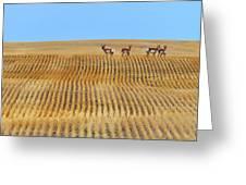 Prairie Pronghorns Greeting Card