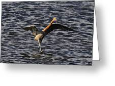 Prancing Heron Greeting Card