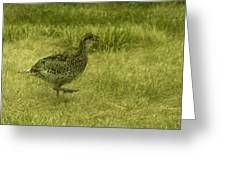 Prarie Chicken At Battle Of Little Bighorn Site Greeting Card