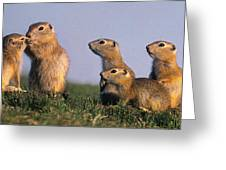 Prarie Dog Family Greeting Card