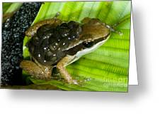 Pratts Rocket Frog With Young Greeting Card