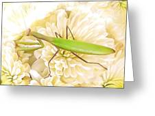 Praying Mantis On A Flower Boquet Greeting Card