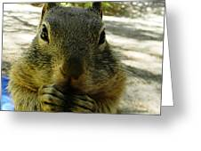 Praying Nuts Greeting Card by DJ Laughlin