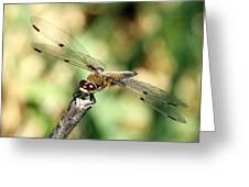 Precarious Perch Greeting Card