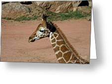 Precious Baby Giraffe Greeting Card by Donna Parlow