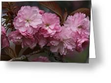 Precious Cherry Blossom Greeting Card