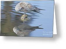 Preening My Feathers Greeting Card