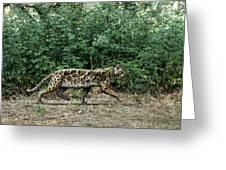 Prehistoric Cat, Artwork Greeting Card