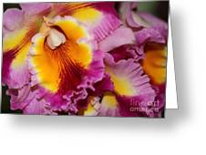 Pretty And Colorful Orchids Greeting Card