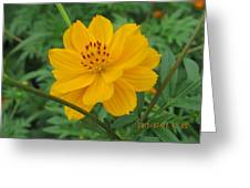 Pretty And Lovely In Yellow Greeting Card