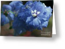 Pretty Blue Delphinia Greeting Card