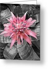 Pretty Bromeliad Greeting Card