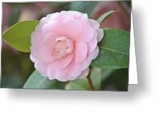 Pretty Camellia Greeting Card