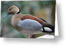 Pretty Duck  Greeting Card