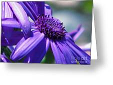Pretty In Pericallis Greeting Card by Rory Sagner